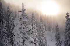 Снег предусматривал верхние части дерева с мглистым заходом солнца в лесе горы Стоковое фото RF