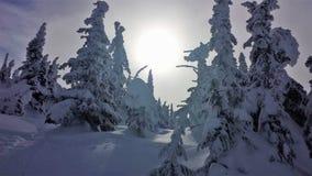 Снег предусматривал деревья с восходом солнца Стоковое Изображение