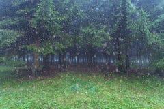 Снег против лесных деревьев стоковые фотографии rf