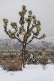 Снег пустыни Стоковое Изображение RF