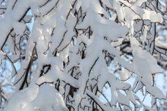 Снег разветвляет предпосылка неба абстрактная Стоковые Изображения