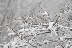 Снег ссылается к формам ледяных кристаллов которые осаждают от атмосферы & x28; обычно от clouds& x29; Стоковое Изображение RF