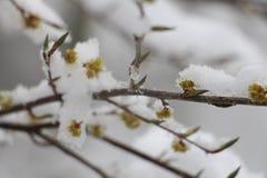 Снег ссылается к формам ледяных кристаллов которые осаждают от атмосферы & x28; обычно от clouds& x29; Стоковые Изображения RF