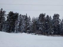 Снег с деревьями в Швеции стоковая фотография