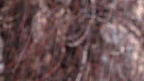 Снег с дождем на запачканной предпосылке Чуть-чуть ветви деревьев Отснятый видеоматериал закреплен петлей без зазоров Bokeh видеоматериал