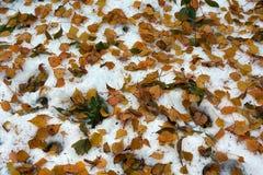 Снег упал прежде чем листья упали  Стоковые Фотографии RF