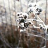 Снег цветка зимы стоковые изображения rf