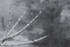 Снег чувствительно установил на тонких хворостинах, нежности предпосылки стоковая фотография rf