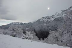 Снег Стоковые Фото