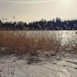 снег, Стоковое фото RF