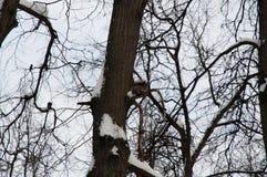 Снег Chrismas Стоковое фото RF