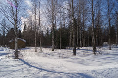 Снег Forrest Стоковое Фото