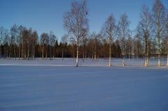 Снег Forrest стоковое изображение rf