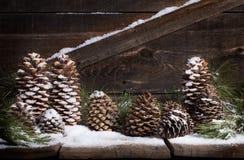 Снег Pinecones Стоковая Фотография RF