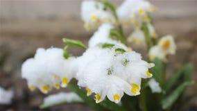 Снег Snowdrop сток-видео