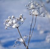 Снежинка от цветка Замороженный цветок на предпосылке голубого неба Интересы природы Красивая снежинка стоковые фото