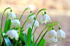 Снежинки весны Стоковые Изображения