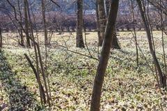 Снежинки весны Стоковая Фотография
