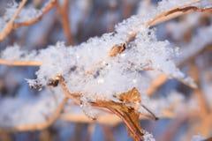 Снежинки на хворостине Стоковое фото RF