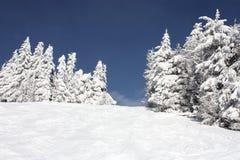 Снежк-покрытое дерево Стоковое Фото