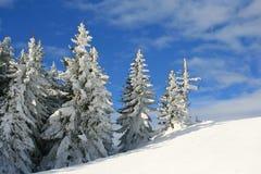 снежное дерево Стоковая Фотография