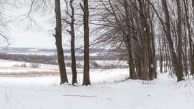 Снежности в лесе зимы видеоматериал
