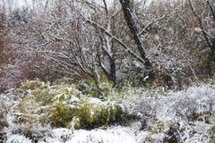 Снежности в зиме леса приходят стоковые изображения rf