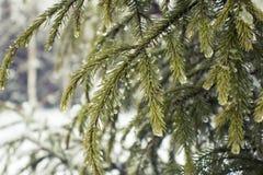 Снежности в Москве, России Русская зима Стоковое Фото