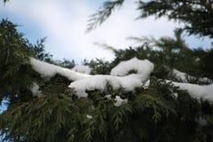 Снежности дерева зимы Стоковое фото RF