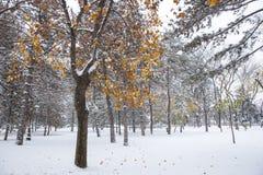 Снежности и прошлой осенью листья Стоковые Фото