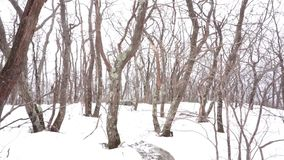 Снежности на дремлющих деревьях в Catskills акции видеоматериалы