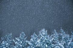 Снежности на ноче на фоне деревьев Стоковые Фото