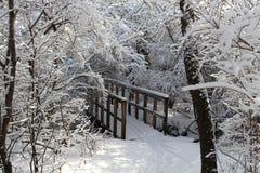 Снежности пешего моста леса новые Стоковое Фото