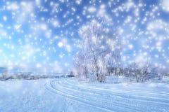 Снежности рождества в парке Стоковое Изображение