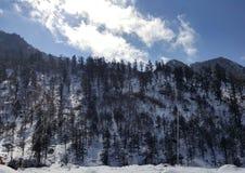снежности Стоковые Фотографии RF