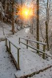 снежно стоковое фото