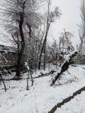 снежно стоковые фотографии rf