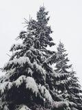 снежно стоковое изображение