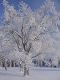 снежный вал Стоковые Изображения
