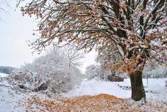 снежный вал Стоковые Фото