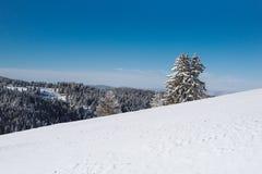 Снежный наклон вверху гора с соснами на заднем плане стоковое изображение