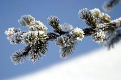 снежный sprig Стоковые Изображения RF