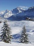 2 снежных спруса на высоком плато Альпов стоковые изображения