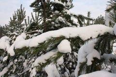 снежок ветвей лежа Стоковая Фотография RF