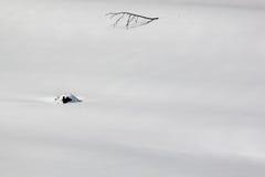 снежок ветви Стоковое фото RF