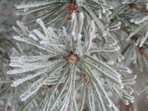 снежок ветви Стоковые Изображения