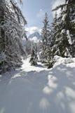 Снежок взбираясь через forrest в доломитах стоковые фотографии rf
