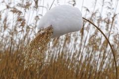 Снежок в поле Стоковое Изображение
