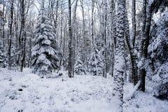 Снежок в пуще Стоковое Изображение