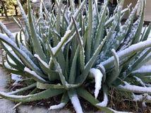 Снежок в Техас Стоковые Фото